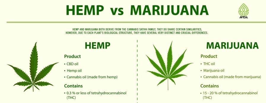 Hemp vs Marijuana Header