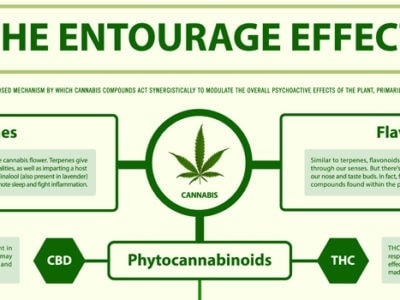 The entourage effect with hemp CBD